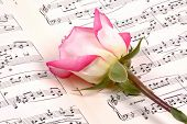 foto of pink rose  - sheet music and a pink rose - JPG