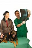picture of animal x-ray  - Owner woman with her dog having conversation with vet man and together looking on spine dog x - JPG