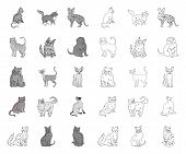Breeds Of Cats Mono, Outline Icons In Set Collection For Design. Pet Cat Vector Symbol Stock Web Ill poster