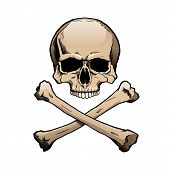 image of skull crossbones  - Colored human skull and crossbones - JPG