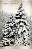 pic of unique landscape  - Retro card with Merry Christmas trees and fir trees covered in snow in a park - JPG