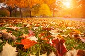 picture of fall day  - Yellow - JPG