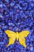 Spring Blue Cornflower With Yellow Butterfly