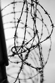 stock photo of barbed wire fence  - Barbed wire on dark fence black and white - JPG