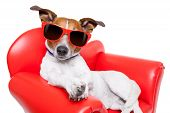 stock photo of couch potato  - dog sitting on red sofa relaxing and resting while chilling out - JPG