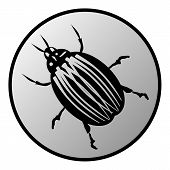 stock photo of potato bug  - Bug button on white background - JPG