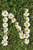 foto of alphabet letters  - letters of daisies on the green grass background - JPG