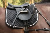 image of horse-breeding  - Black leather saddle and tack on black horse