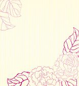 peonies background