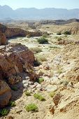 stock photo of ravines  - Ravine in Makhtesh Katan in Negev desert Israel - JPG