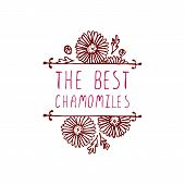 image of chamomile  - The best chamomiles - JPG