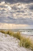 stock photo of dune grass  - Picture of the coast of the Baltic Sea on a stormy day with dune grass and dark clouds in the evening - JPG