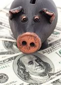 pic of fantail  - Black pig piggy bank stands on 100 dollar bills