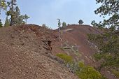 stock photo of butts  - Lava Butte forest trees and crater near Bend Oregon - JPG