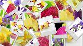 picture of purple iris  - Purple and yellow iris flowers photo collage - JPG