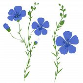 foto of flax plant  - Vector illustration of flax plant in bloom - JPG