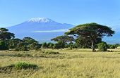 stock photo of kilimanjaro  - Mount Kilimanjaro in Kenya Amboseli National Park