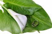 pic of calla  - white calla lily and wedding rings on green leaves close up - JPG