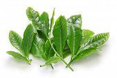 stock photo of flush  - Japanese green tea first flush leaves isolated on white background - JPG